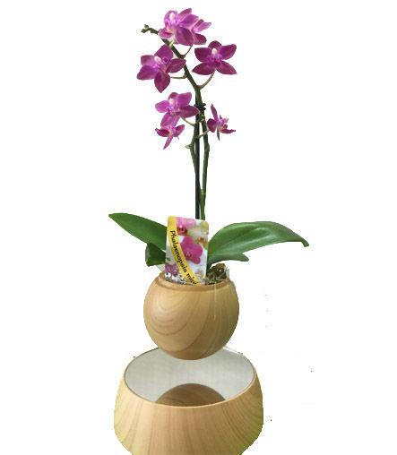 Air bonsai lévitation